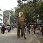 Bodhgaya street scene with elephant