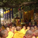 His Holiness Karmapa sitting under the sacred bodhi tree the site of Lord Buddhas enlightenment surrounded by a sea of sangha